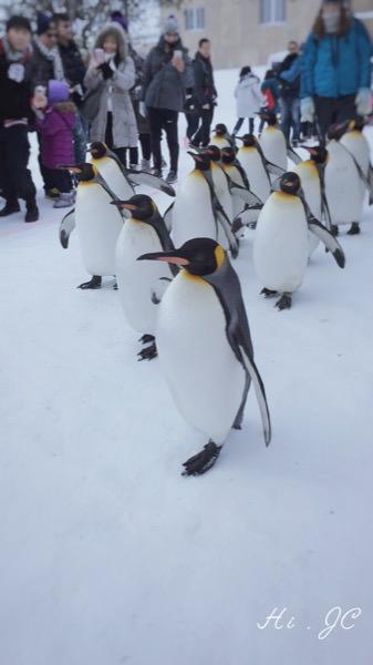[旅行] 2016日本冬季北海道親子行之來看冬季限定版的企鵝散步的旭山動物園